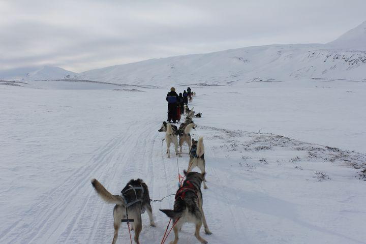Peak hour on the husky trail - My life through a lens