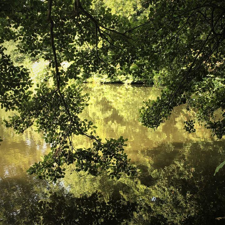 Dappled Shadey Lakeside Retreat - Altiora Photographix