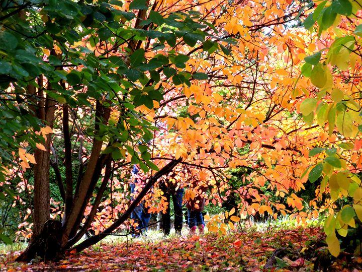Fall - Taylor Ludtke