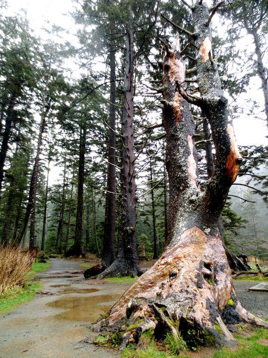 Forest 4 - Taylor Ludtke
