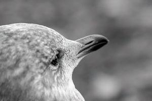 Bird - close up portrait
