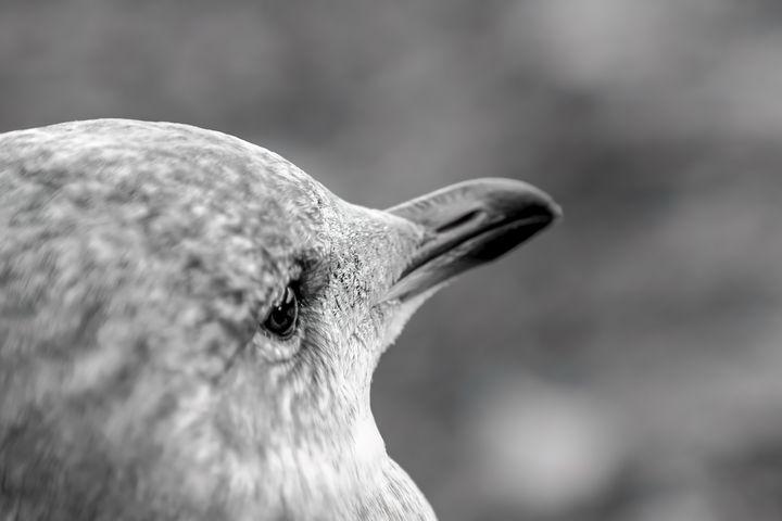 Bird - close up portrait - MWolverine