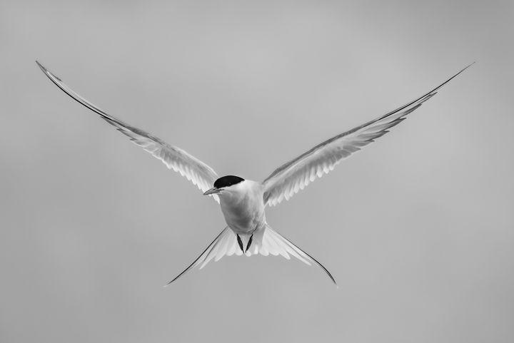 Bird in flight - portrait - MWolverine