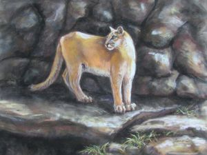 Sampson the Mountain Lion