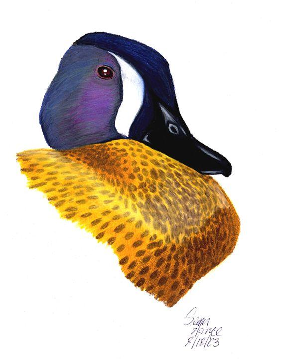 Blue-Winged Teal - Sean's Wildlife Images