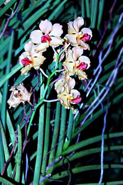Flower at Night - SweetArt