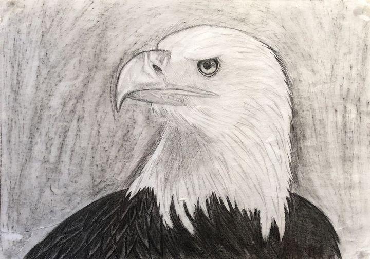 Eagle - Dominika