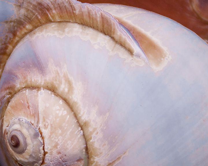 Sea Snail - Olde Hippie Dude Designs