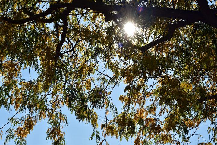 Trees in Fall - Skylar