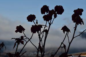 Flowers in Wenatchee