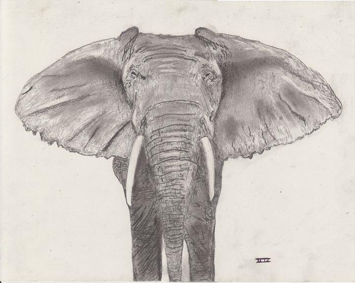 African Elephant - David I. Jackson