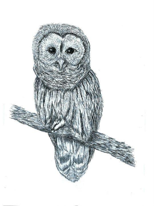 Barn Owl In Black Biro Pen - red-amber65