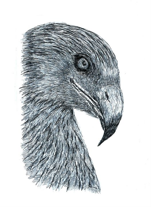 Eagle Head - Bic Biro Pen Drawing - red-amber65