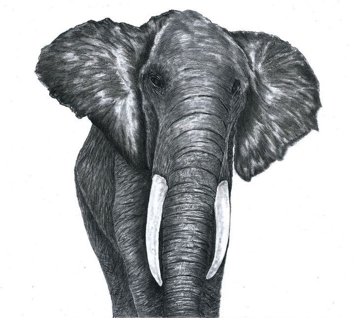 Elephant - Pencil Drawing - red-amber65