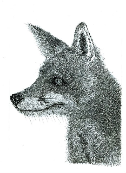 Fox - Bic Biro Pen Drawing - red-amber65