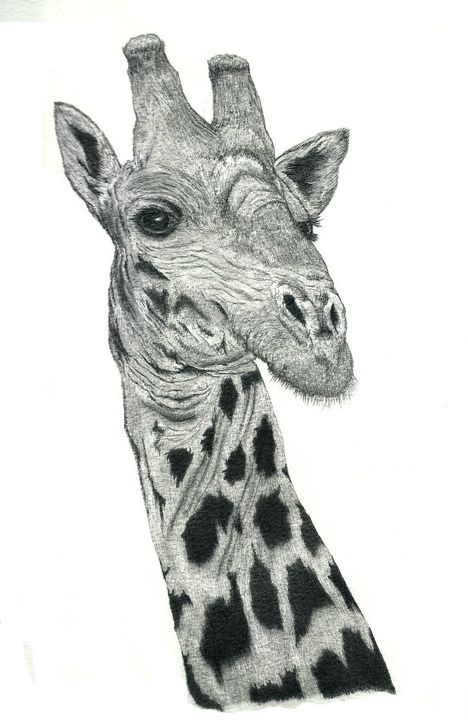 Giraffe - Pencil Drawing - red-amber65