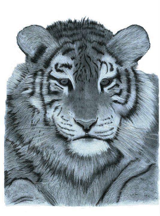 Tiger Close Up - Pencil Drawing - red-amber65