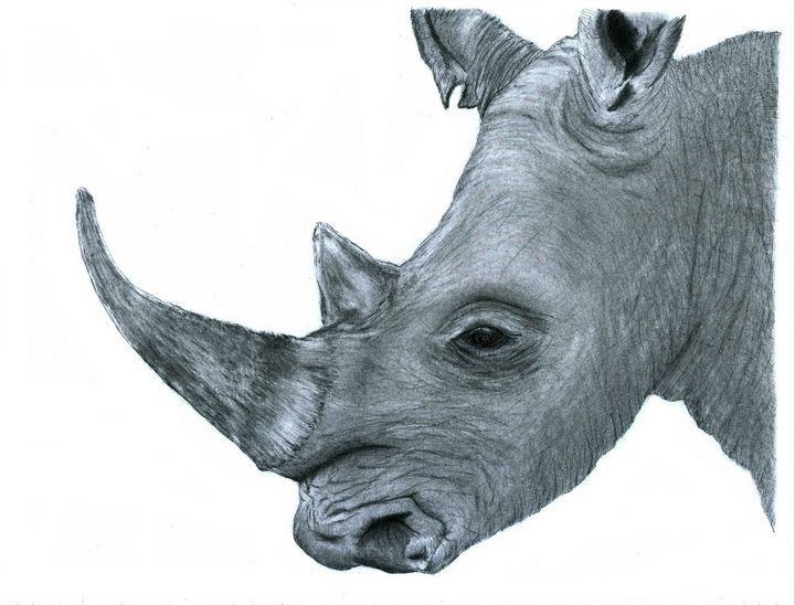 Rhino - Pencil Drawing - red-amber65