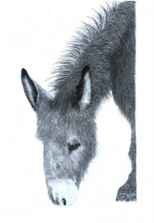 Donkey - Pencil Drawing - red-amber65