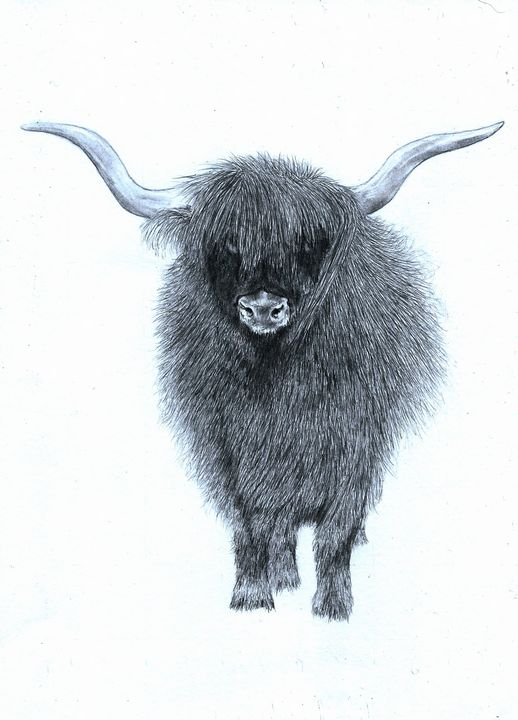 Highland Cattle - Pencil Drawing - red-amber65