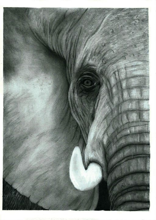 Elephant Head Close Up - Pencil Draw - red-amber65