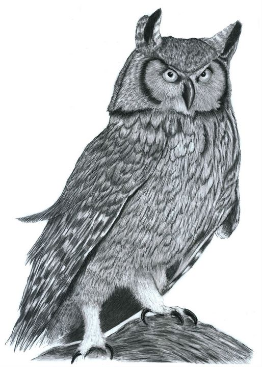 Owl - Pencil Drawing - red-amber65