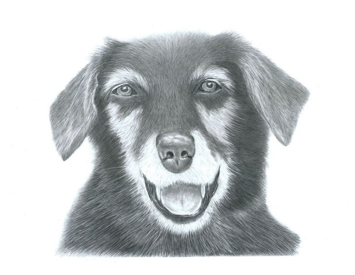 Dog Portrait - Pencil Drawing - red-amber65