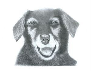 Dog Portrait - Pencil Drawing