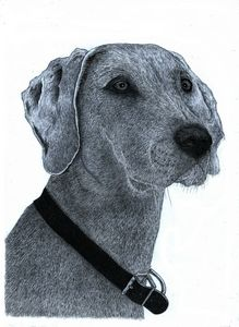 Great Dane - Pencil Drawing