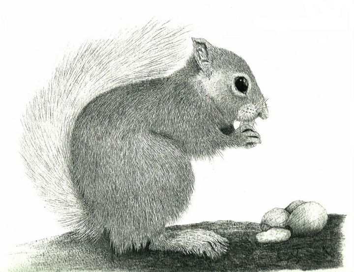 Red Squirrel #1 - Pencil Drawing - red-amber65