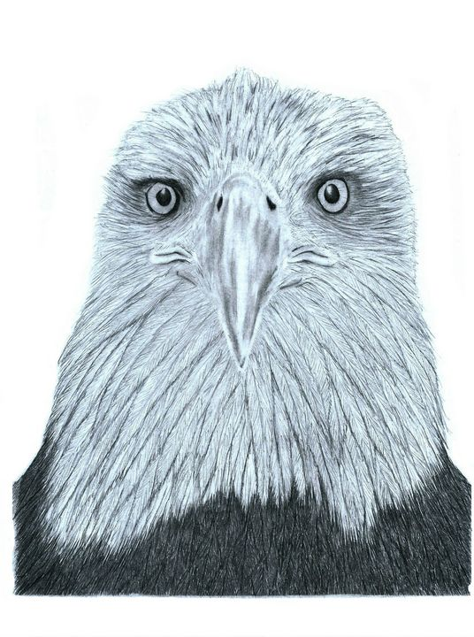 Bald Eagle (Head) - Pencil Drawing - red-amber65