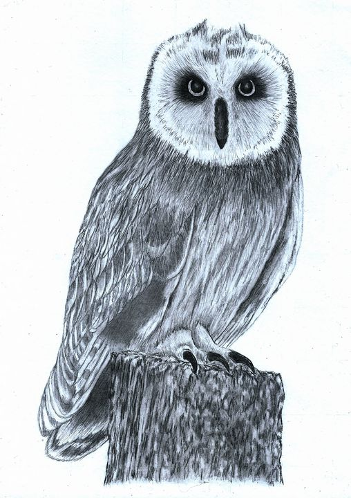 Short Eared Owl - Pencil Drawing - red-amber65