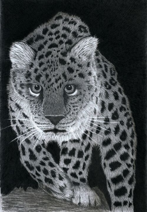 Amur Leopard - Pencil Drawing - red-amber65