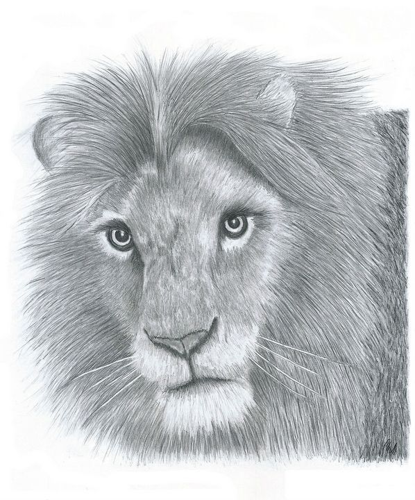 Lion - Pencil Drawing - red-amber65