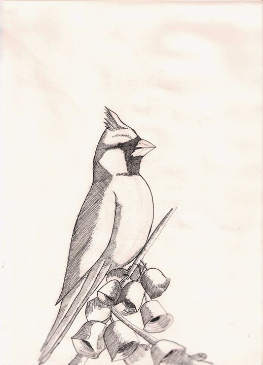 cardinal - Adriel L. Hernandez