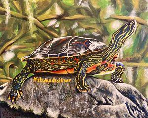 Miskaadesikwe: Red Bellied Turtle