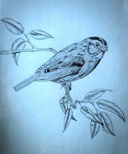 little sparrow - A malins sketch art.