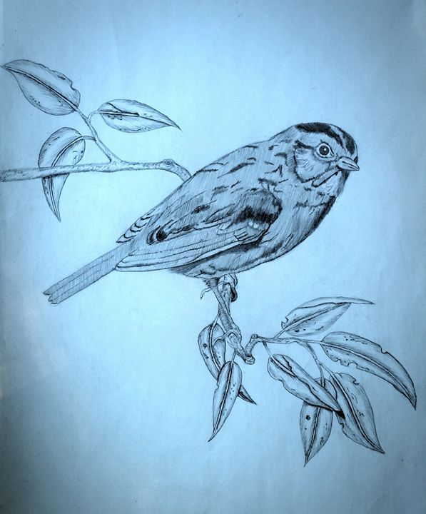 little sparrow - A malins sketch art.