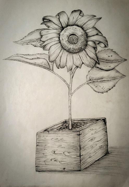 sun flower - A malins sketch art.