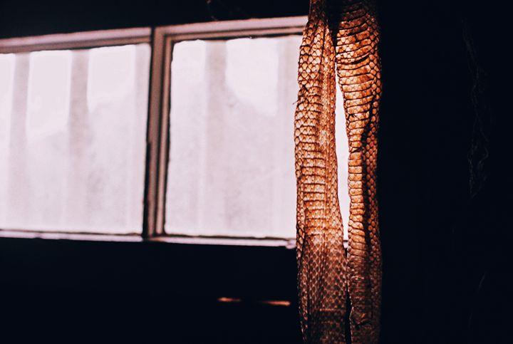 Snake Skin - Jay Kim Photography