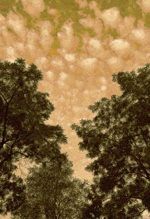 Van Gogh Brown - David Fleming Photographs