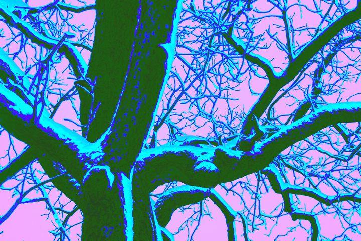 Winter Chestnut - David Fleming Photographs