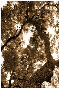 Chestnut Sky