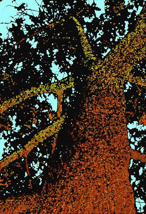 Glowing Oak (2 - David Fleming Photographs