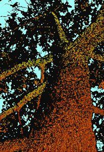 Glowing Oak (2