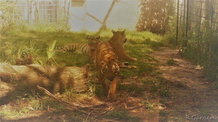 tiger - BullHeaded Art