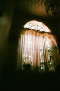 Window Pane Plants