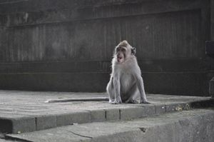 Monkey smile - Kwazen Gallery