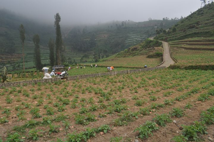 Farmers working in vegetable field - Kwazen Gallery