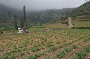 Farmers working in vegetable field